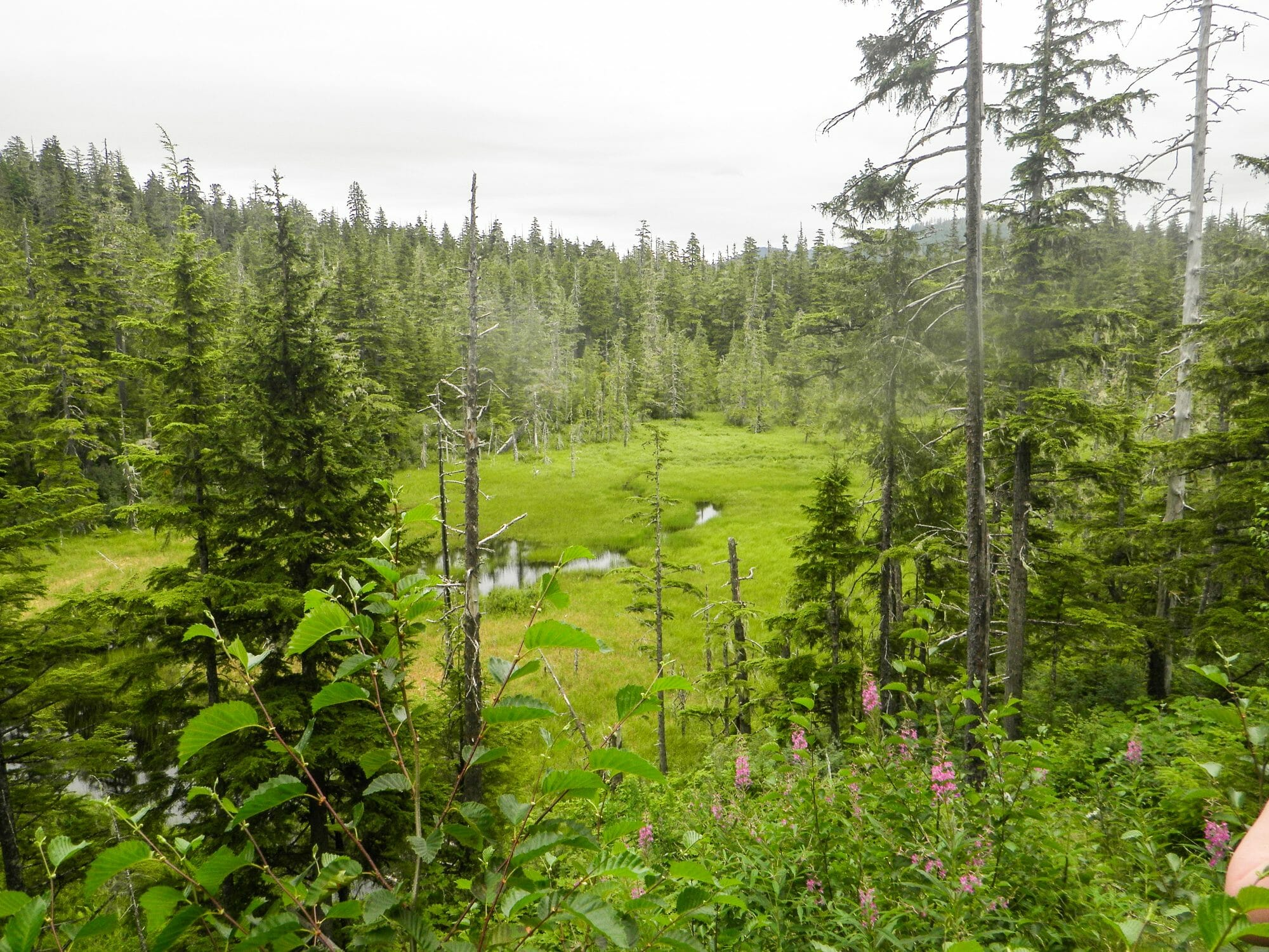 Gunnuk Creek S. - Kake, Alaska